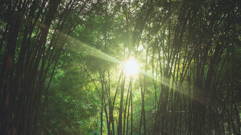dapur bambu